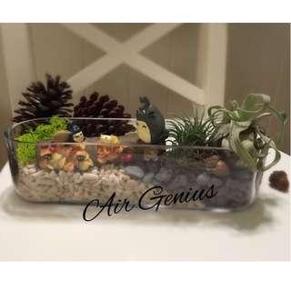 《空氣精靈Air Genius》空氣鳳梨-龍貓系列-豆豆龍-橡果子-多肉植物-仙人掌