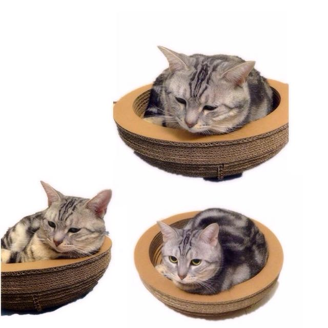 來碗裡來睡覺吧!貓咪貓抓板貓睡墊貓籠內紙箱