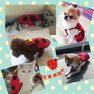 Brand New Pet Clothings ~ Vibrant Red Lady Bug Tee