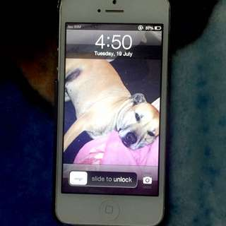 WHTE IPHONE5