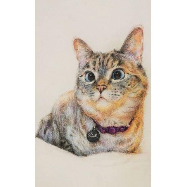 貓咪 寵物 客製化 色鉛筆畫