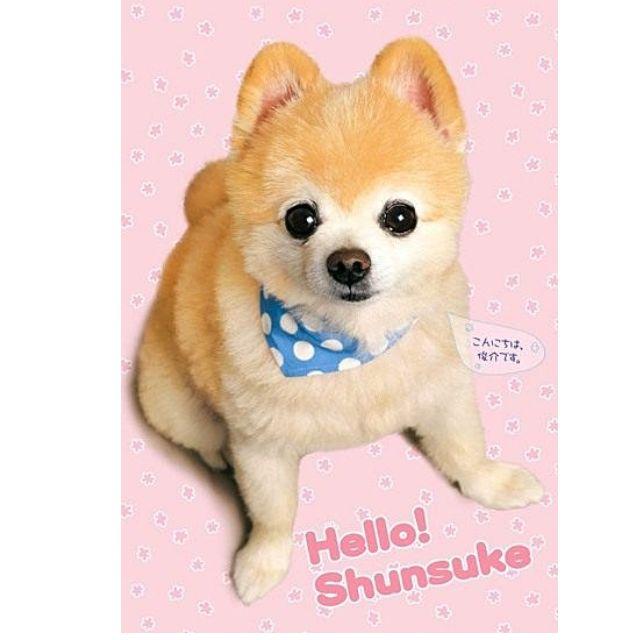 【拼圖LocalKing】〝現貨〞 日本拼圖 300片同形狀切塊達人級 博美狗 俊介! SHUNSUKE 你好!AP48-701