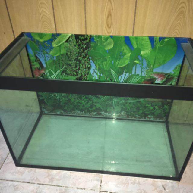 Fish Tank With Free Rock Platform