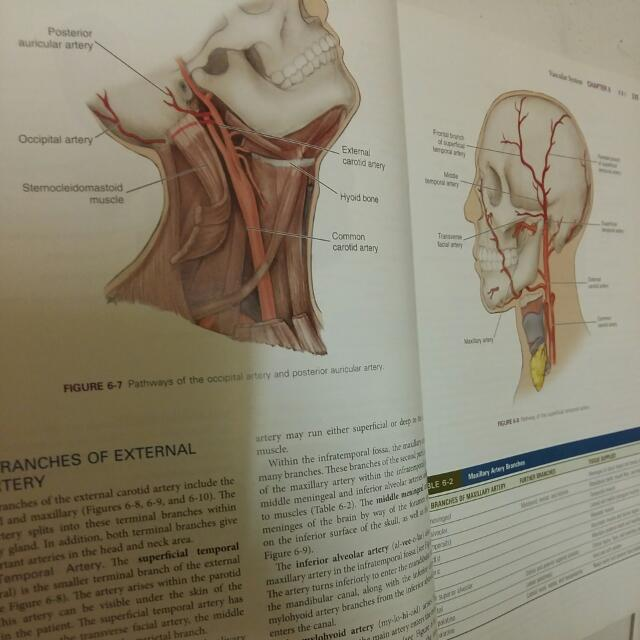 Illustrated Anatomy Of The Head & Neck By Fehrenbach - Dentistry ...