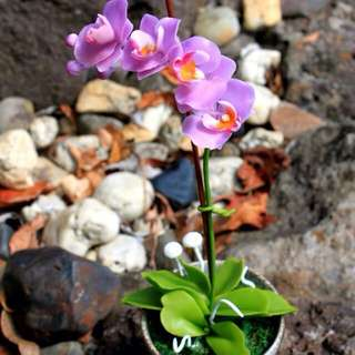 Made to order-air dried clay-Phalanopsis Orchid