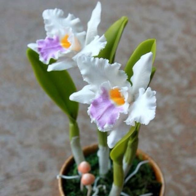 Made to order-air dried clay flower- Cattleya Orchid