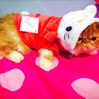 Baju Kucing Kitty