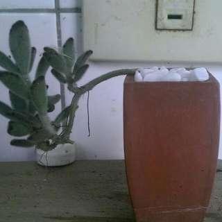 穀雨陶製拇指盆栽
