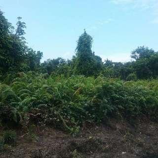 2.2 Acre Land In Tanjung Adang