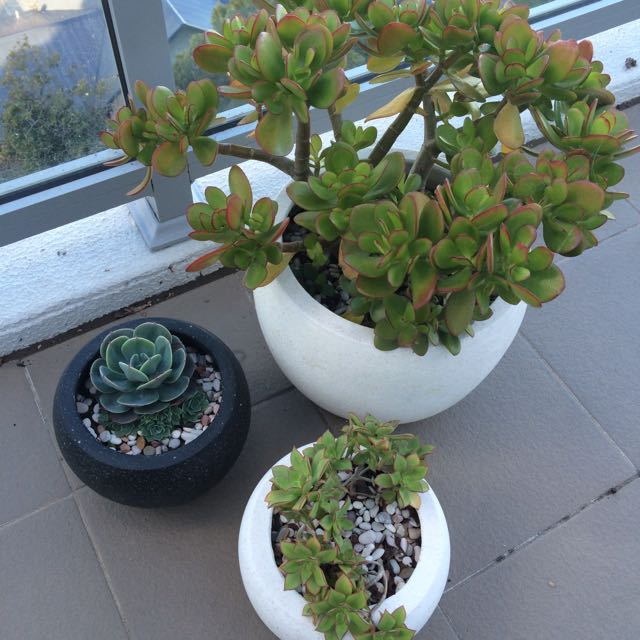 Beautiful Pots With Succulents