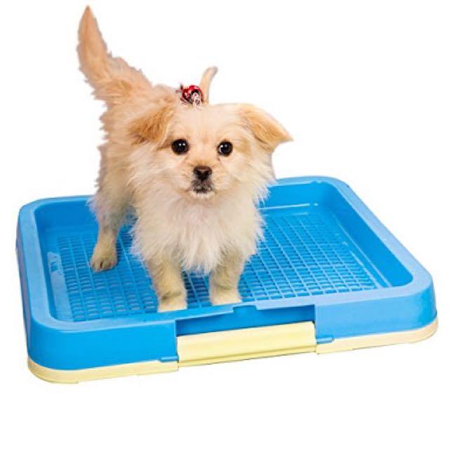 Dog Indoor Potty Training Tray