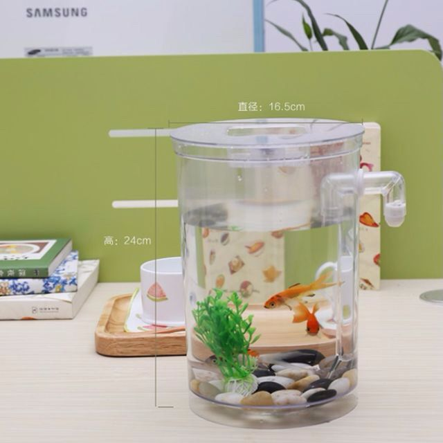 Self Cleaning Fish Tank And Crs Shrimp Pet Supplies On