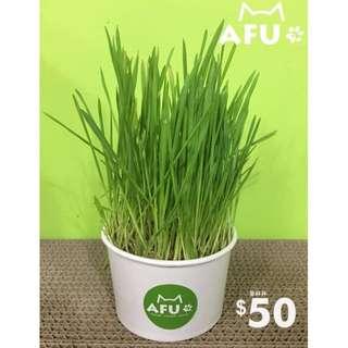 【AFU】阿富 草杯杯 特價50元! 辦公室療癒小盆栽