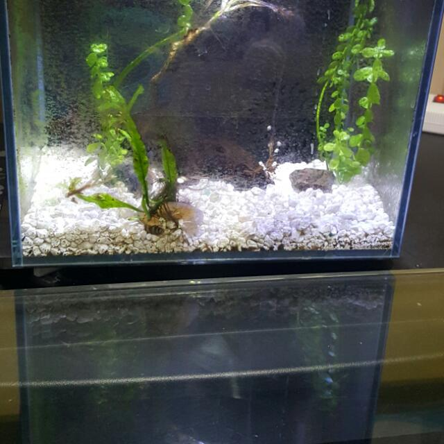 * Price Drop! *  45 gallon fish tank with live rock, corals, and sand. $350 Also, a biocube for sweet water.  comes with snails, plant and gravel.  $50