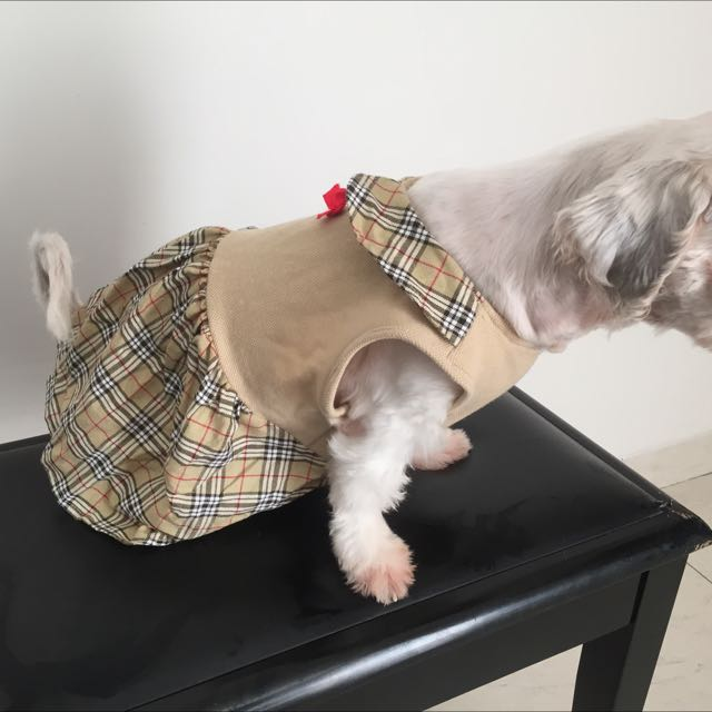 burberry dog dress M