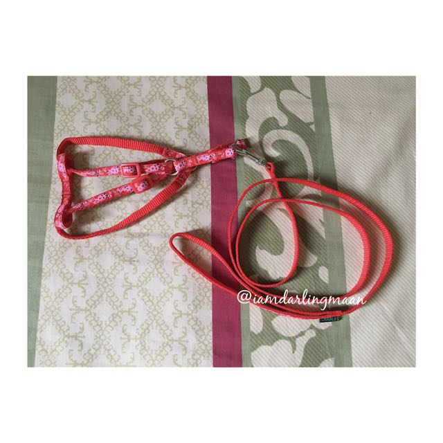 Charles Red Dog Harness With Leash