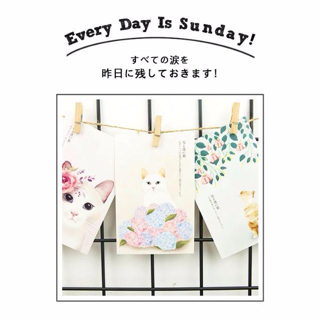【花と迷い猫】30张盒装手绘卡通猫咪 Cats kitty flower cute postcards [PO]