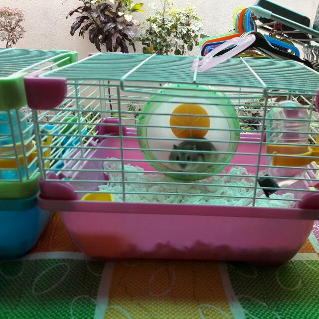 Hamster For Sale With Cage