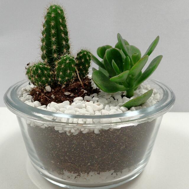 Diy Cactus Terrarium Kit Office Garden Design Craft Handmade