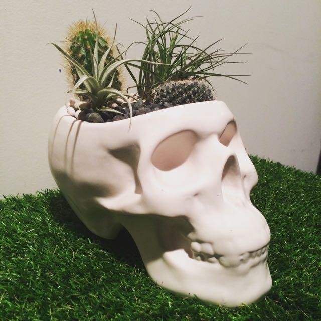 Handmade Skull Terrarium