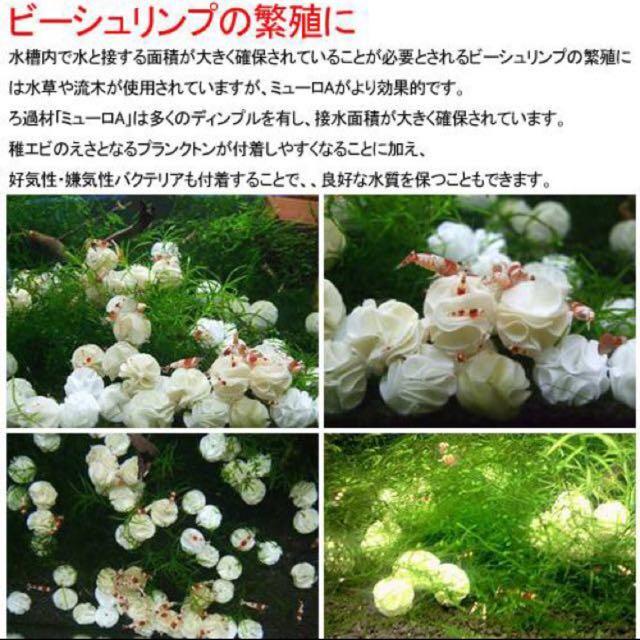 JAPAN Baby Bee Shrimp Shelter/Media