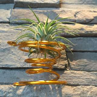 Air plant Holder - 7 Colors To Chose