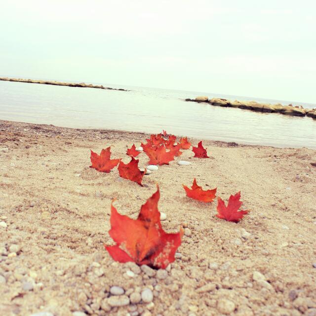 8x10 Fall Beach Photo.