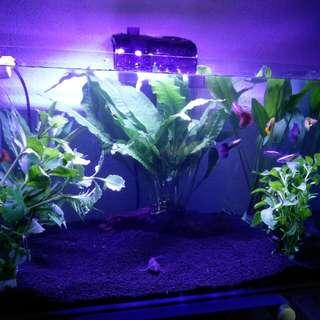 My Beautiful Fish Tank