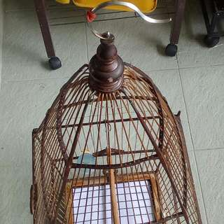 Jambul Cage For Sale