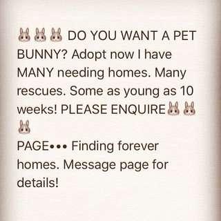 Bunnies For Adoption