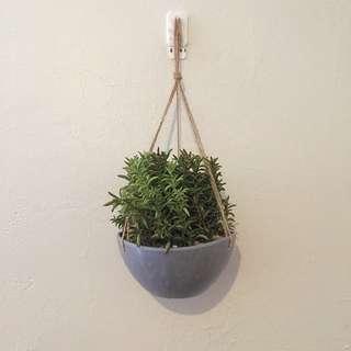 Cute Hanging Mini Shrub