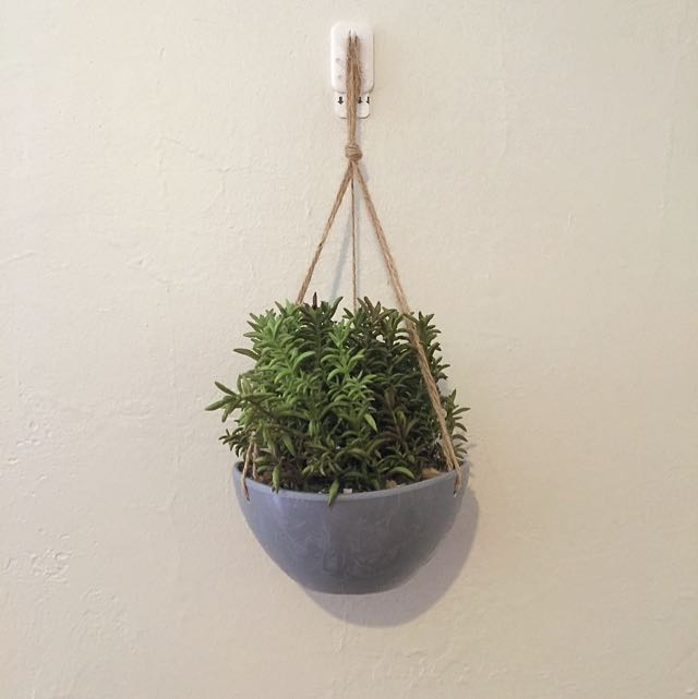 Cute Hanging Mini Shrub