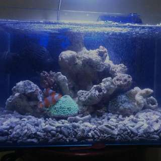 Jual Full Set Akuarium Laut