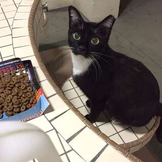Appeal For Cat Food