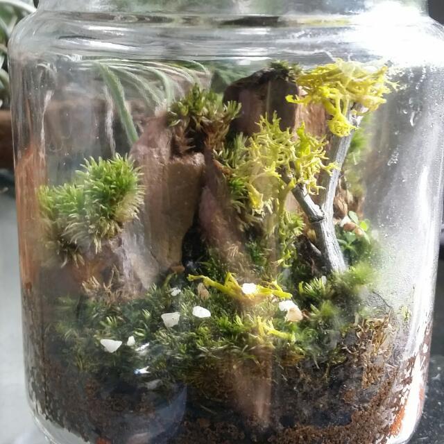Mountainscape Mini Moss Terrarium Gardening On Carousell