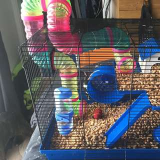 Mouse And Cages
