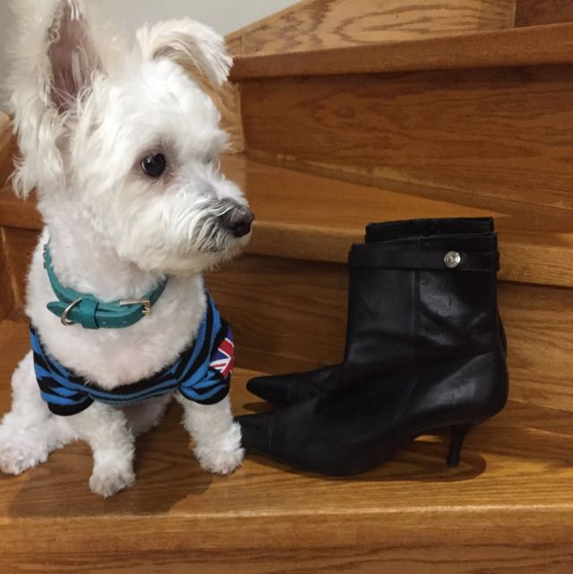 Micheals Kors 3/4 Boots Leather , Sexy Boots , Puppy Not Included Size 8, But Will fit 81/2