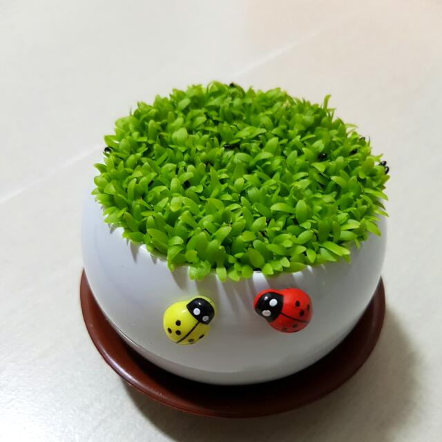 We Normally Sell Two A Day Today We Are Selling Up To 15: Happy Plant For Birthday Gift!, Gardening On Carousell