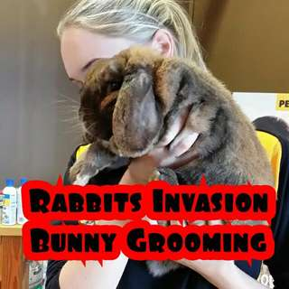 Rabbit / Bunny grooming. Professional bunny groomer in Melbourne