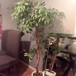 5 Foot Tall Artificial Tree