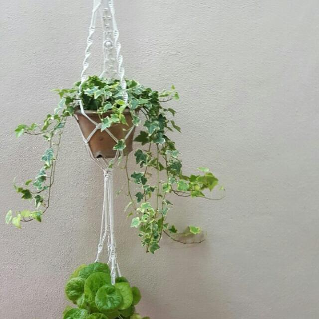 💕💕Macrame Double Pot Hanger, Plant Hanger, Hanging Planter, Cotton Rope Hanger -Elegance