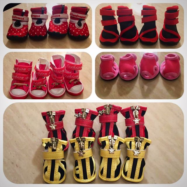 Cutest Dog Shoes/pairs