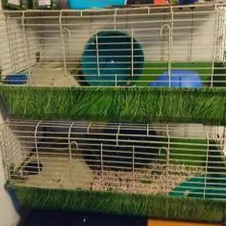 2 Large Cages