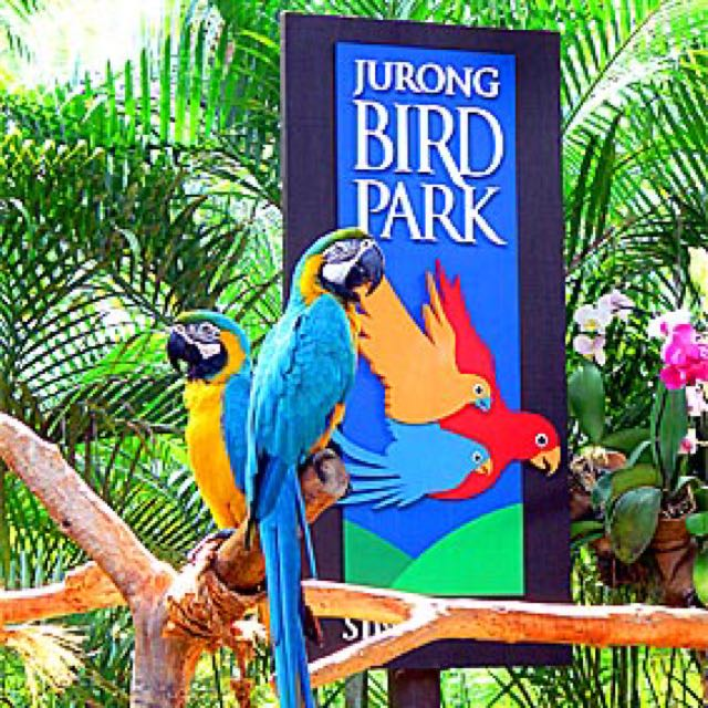 Jurong Bird Park With Ride, Entertainment, Attractions on