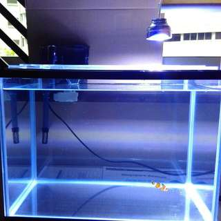 Ocean Free Tank (35cm By 24cm By 22cm) With Lid  Dolphin Power Filter H100