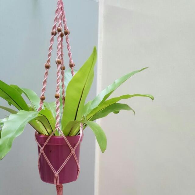 Macrame Pot Hanger - Pink Twister
