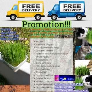 Cat Organic Wheatgrass