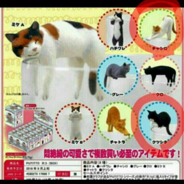 貓 緣子(換/售)