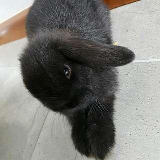 Rabbit Breeder