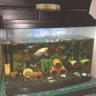 二手魚缸(不含魚)